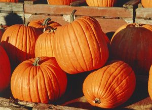 Pumpkins / wikipedia